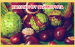 Избавления от гайморита каштаном — лечение и его полезные свойства