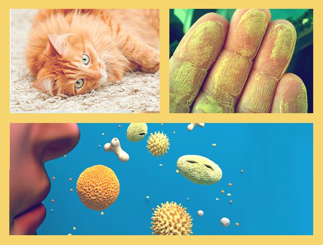 Пыльца от цветов, пыль и шерсть животных