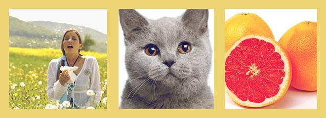 девушка чихает на траве, серый кот, грейпфрут, апельсин