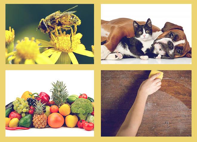 пыльца, кот и собака, фрукты и овощи, пыль вытирать