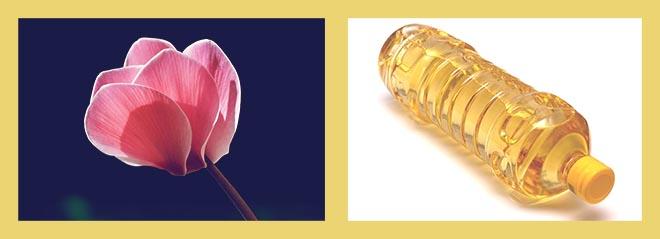 цветок цикламена, масло